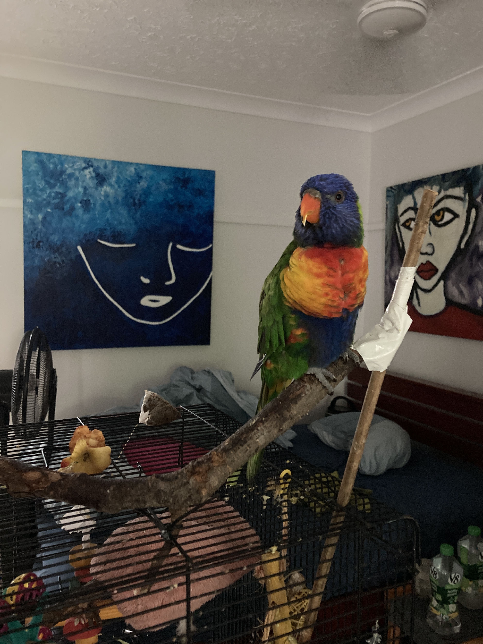 Zoe's perch