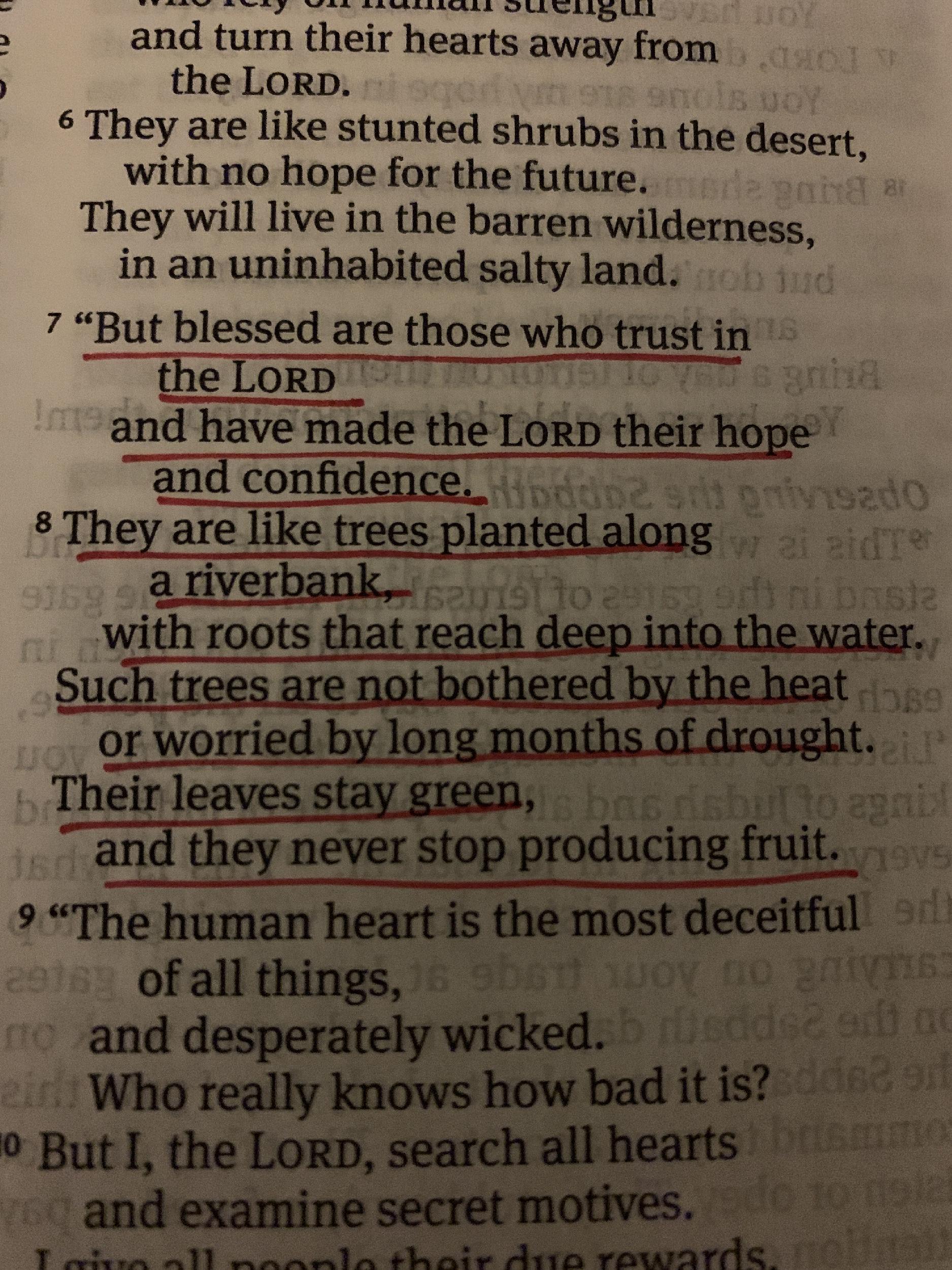 Jeremiah 17:7-8, NLT