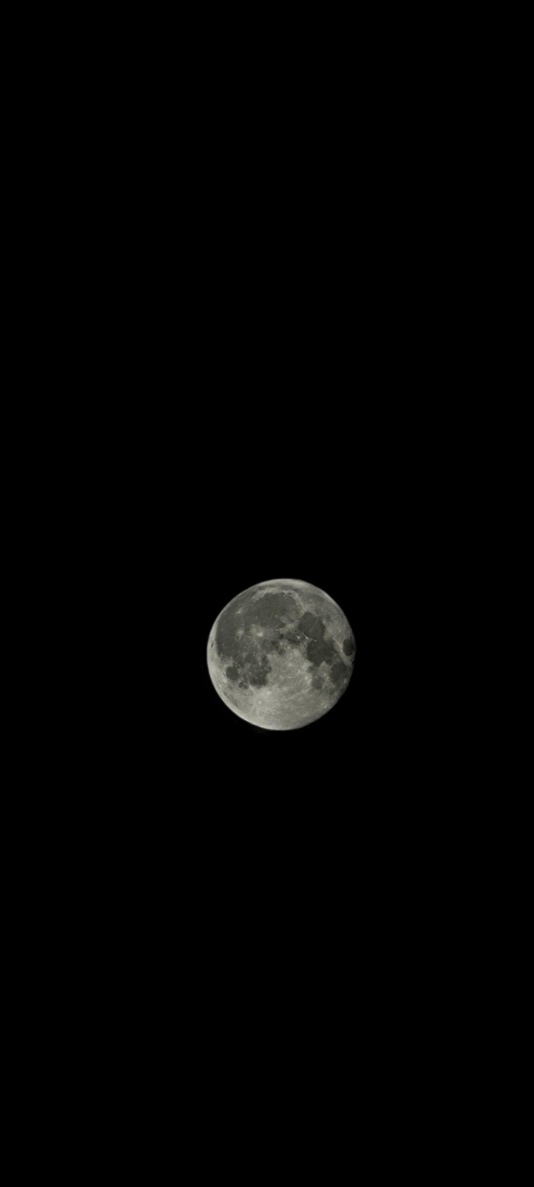 Soaking in the moonlight. Taken by @r_sylvar.onyx