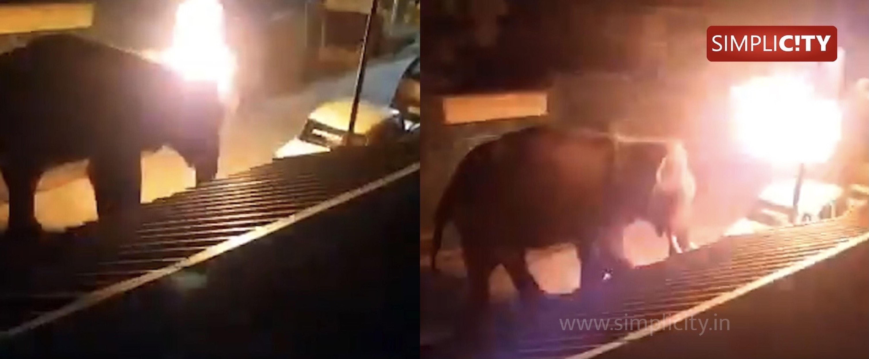 Elephant set on fire